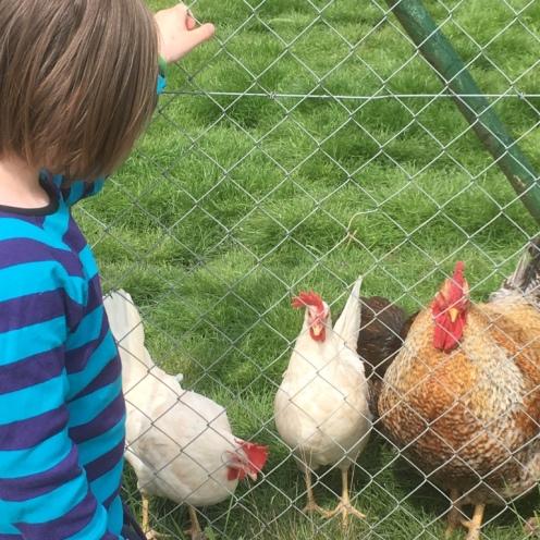 Hühner I