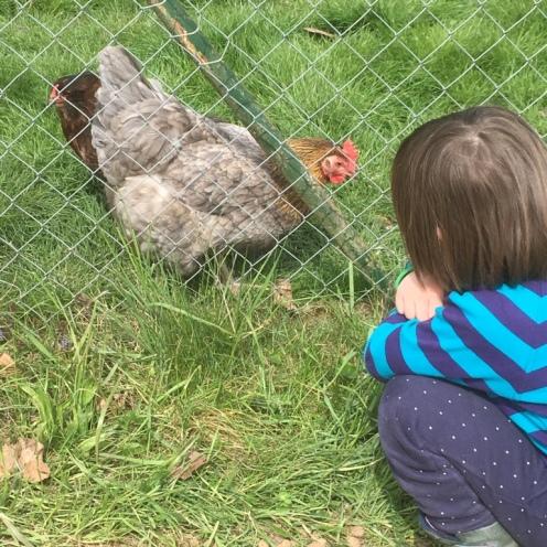 Hühner II