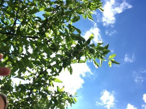 ... unterm Apfelbaum.