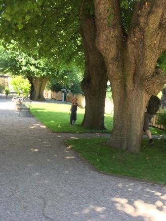Linnés Garten II