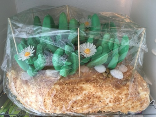 Torte IV