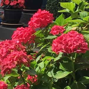Mehr Blüten.