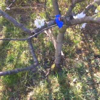 Im Baum.
